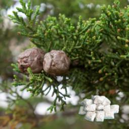 Opłatek mały zielony 100x62 kopa