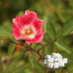 Opłatek mały żółty 100x62 kopa